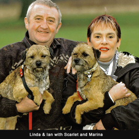 two Irish terriers with their owners